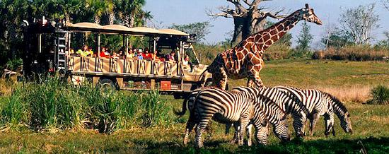 kilimanjaro-safaris.jpg